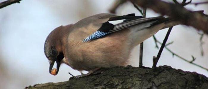Kiedy opinia ornitologiczna i chiropterologiczna są potrzebne i po co się je wykonuje?